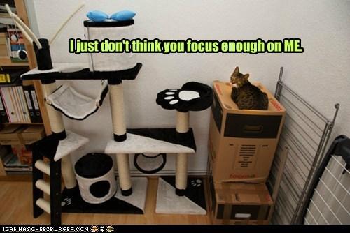 Cats captions focus me ego narcism - 6704993024