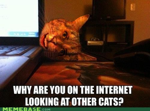cat overly attached girlfrend internet laptop - 6705000448
