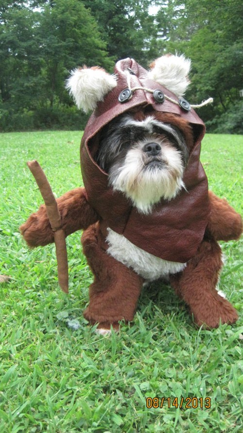 dogs,cosplay,star wars,wicket