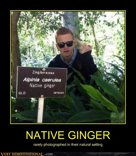 ginger native person plant - 6705620480