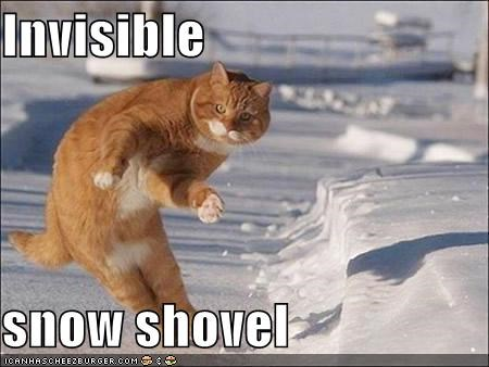 determination,ginger,invisible,lolcats,orange,poison,snow shovel