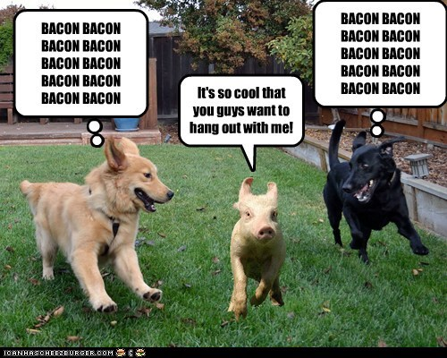 It's so cool that you guys want to hang out with me! BACON BACON BACON BACON BACON BACON BACON BACON BACON BACON BACON BACON BACON BACON BACON BACON BACON BACON BACON BACON