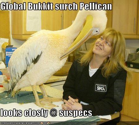 BLSG bukkit lolbird lolcats lolpelican pelican suspect - 670748416