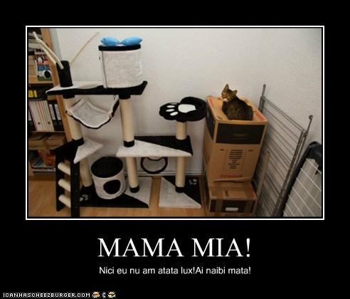 Cheezburger Image 6707639296