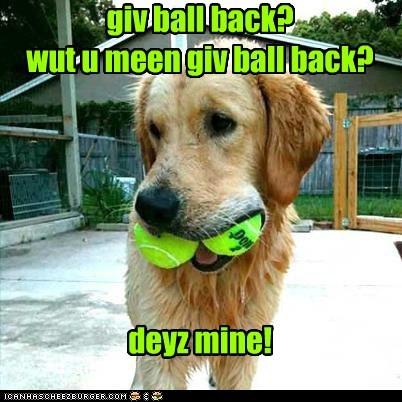 fetch balls dogs tennis balls mine golden retriever - 6707690240