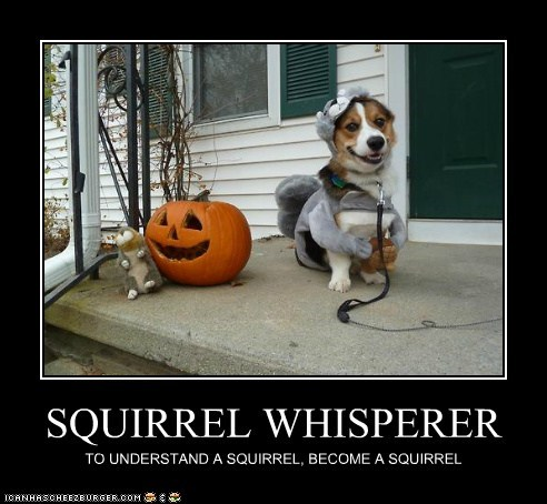 costume disguise dogs whisperer squirrels corgi
