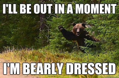 pun,bear