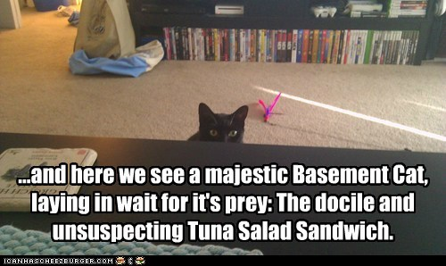 nature,basement cat,tuna,tuna sandwich,attack,captions,Predator,sandwich,prey,Cats