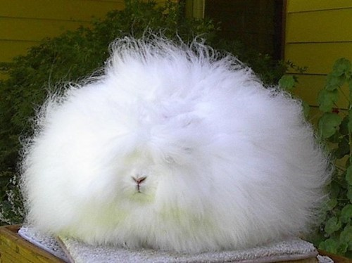 costume ghost halloween happy bunday Fluffy floofy rabbit bunny squee - 6708358400
