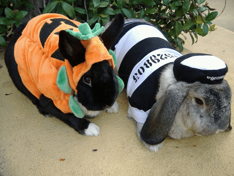 costume pumpkins prisoner halloween happy bunday rabbit bunny squee