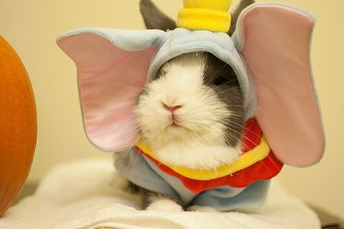 costume halloween happy bunday dumbo rabbit bunny squee g rated