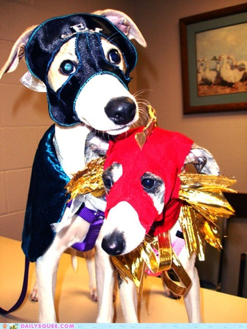 whippet costume dogs luchadore reader squee pet squee - 6708427776