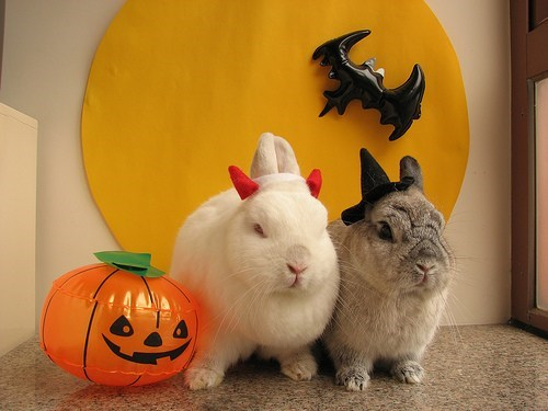 bunnies,cute,costumed critters,g rated