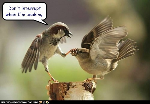 shut up,beak,birds,grabbing,interrupting,talking