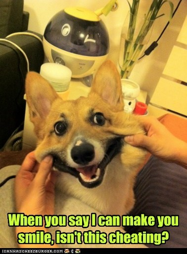 dogs cheeks pulling corgi cheating smile