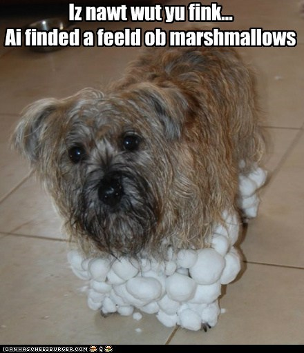 Iz nawt wut yu fink... Ai finded a feeld ob marshmallows