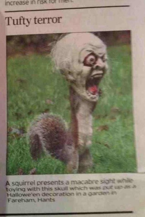 costume halloween mask squirrel Hall of Fame best of week