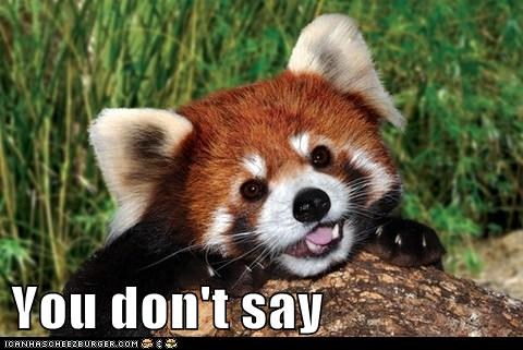 red panda rage face you dont say meme nicolas cage - 6709566464