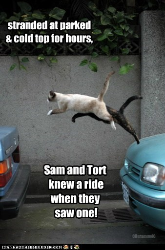 stranded at parked & cold top for hours, Sam and Tort knew a ride when they saw one! OHgrammyIO