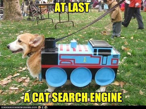 AT LAST A CAT SEARCH ENGINE