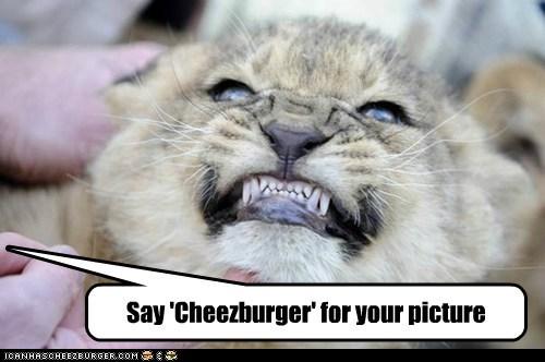 Cheezburger Image 6710078720