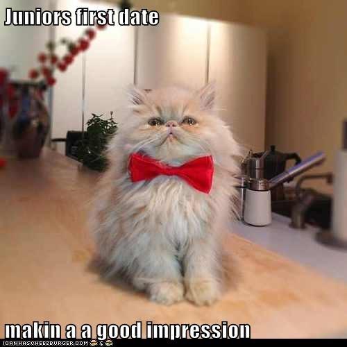 first impression bowtie date impression romance captions Cats - 6710845952