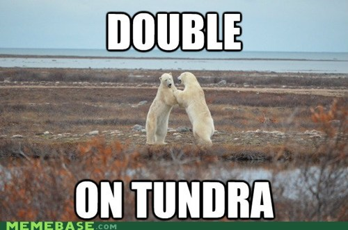 tundra,double,entendre,get it tho,polar bears