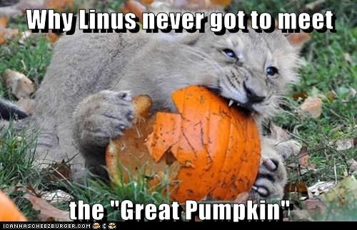 pumpkins,cub,lion,bite,eating,Linus,great pumpkin