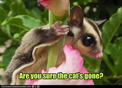 are you sure,scared,sugar glider,Cats,flying squirrel