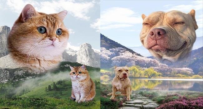landscapes pets photos portraits animals - 6712069