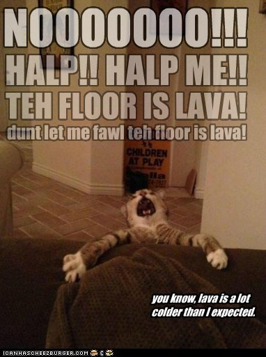 floor is lava,floor,rug,captions,lava,Cats,carpet