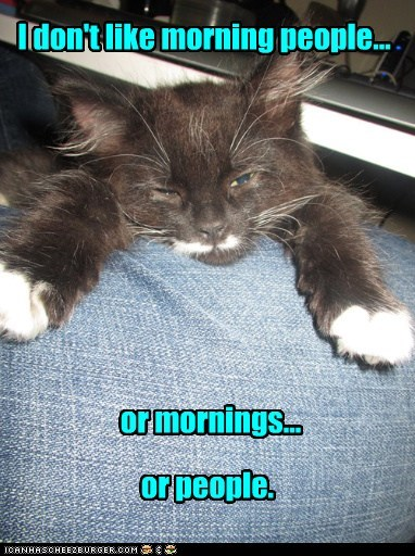 hate mornings people early bird captions morning Cats - 6712877824