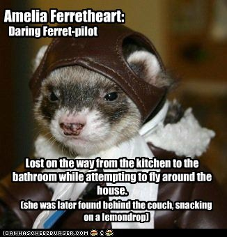Amelia Ferretheart: Lost on the way from the kitchen to the bathroom while attempting to fly around the house. (she was later found behind the couch, snacking on a lemondrop) Daring Ferret-pilot