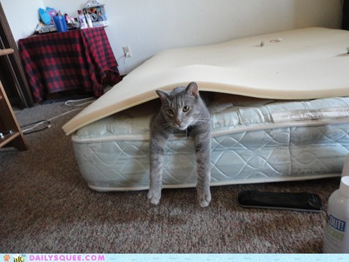 reader squee cozy pet mattress Cats squee - 6713234176