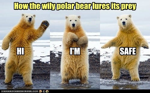 How the wily polar bear lures its prey HI I'M SAFE