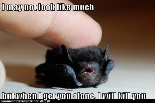 baby,i will kill you,cute,small,threat,alone,bat