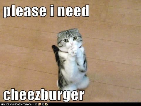 please i need  cheezburger