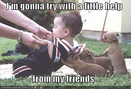 chihuahua puppy - 671590144