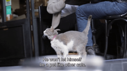 good mannered cat