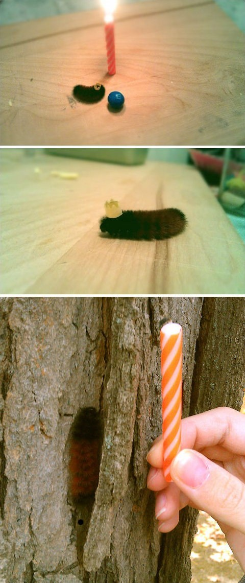 caterpillar birthday party insect birthday bug candle Party squee hat caterpillar - 6716579328