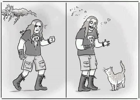 heavy metal Cats - 6716692992