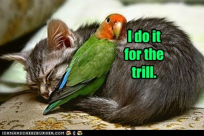 cat pun thrill trill hug parrot daredevil