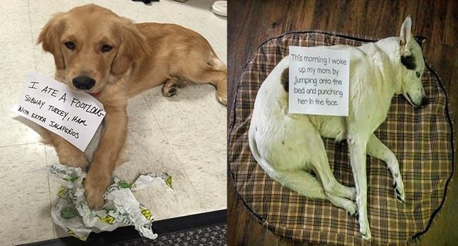 FAILS hilarious dogs lolz adorable wtf dog fails cute funny dogs lol dog shaming funny cuteness overload - 6716933
