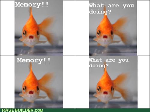 memory goldfish stahp - 6716942080