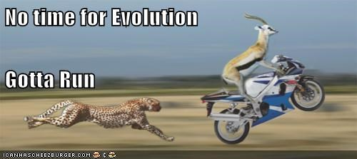 cheetah evolution no time gazelle fast running motorcycle