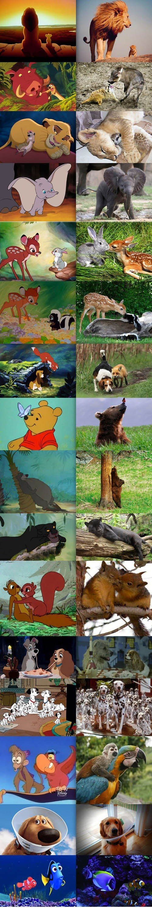 disney,real life,animation,Movie,animals