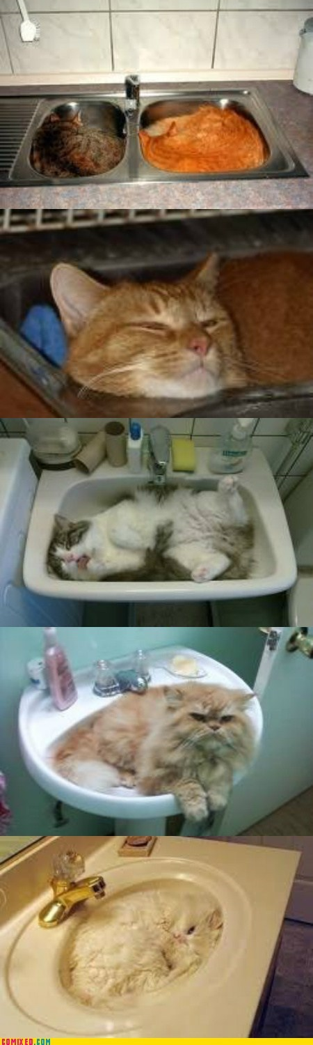 taken cat pets sink sleeping - 6717660672