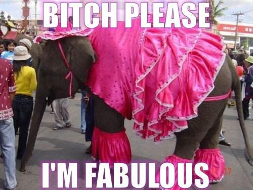 elephant,pink