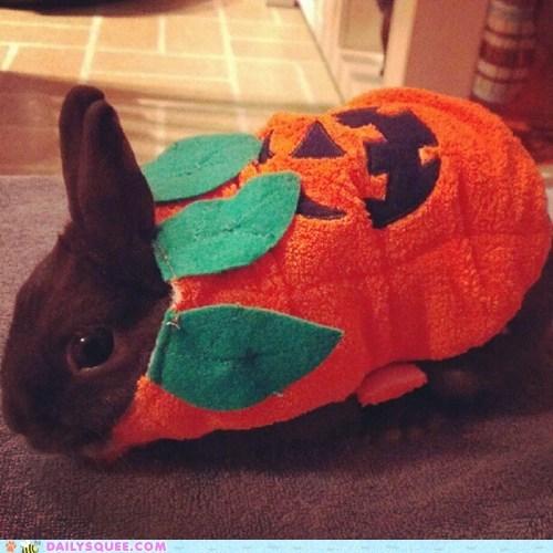 costume reader squee halloween pet rabbit jackolantern bunny squee - 6717933056