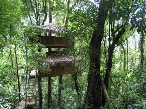 tree house,hotel,costa rica